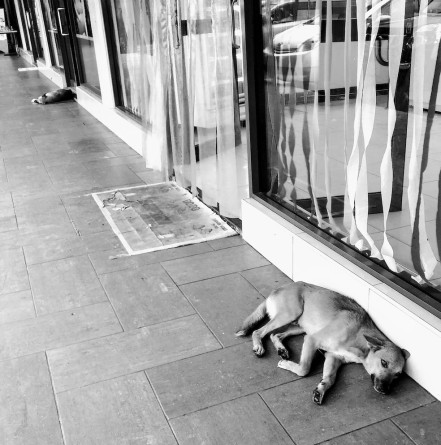 two dogs at storefront